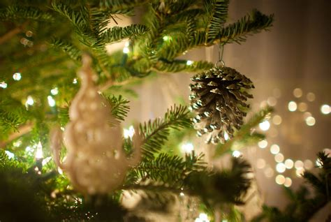 real vs artificial christmas trees earth911 com