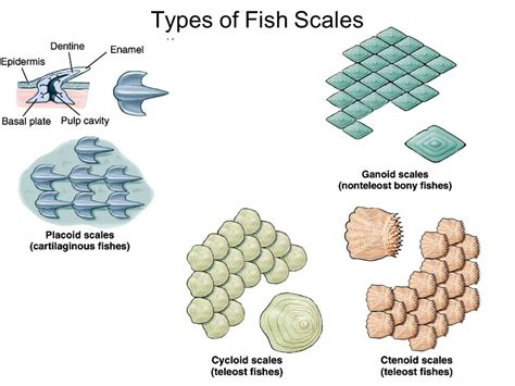 fish  scales  fins list driverlayer search engine