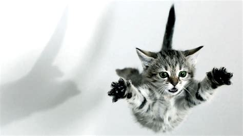 Cat, Jump, Hd Cat Wallpapers, Kittens, Puffy Cats