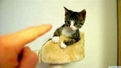 Cat Cutest Ever Imgur Kittens Animals Super