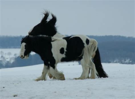 pferdehusten im winter