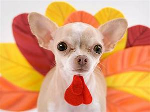 infographic which thanksgiving foods are okay to give your dog