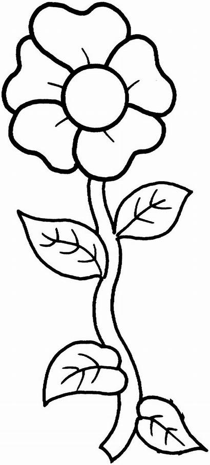 Coloring Flower Single Petal Template Pages