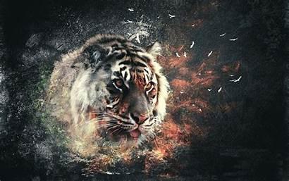 Abstract Tiger Wallpapersafari