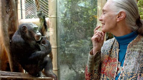 jane goodall age  wont stop fighting pandemic  damned
