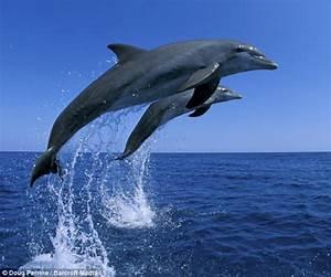 Schöne Delfin Bilder : lebhafte delfine tanzen vor der kamera radio china international ~ Frokenaadalensverden.com Haus und Dekorationen