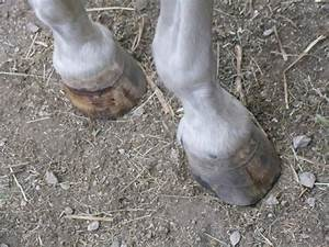 Midwesthorse Blog  Horse Hoof Tips In This Horrible Hot