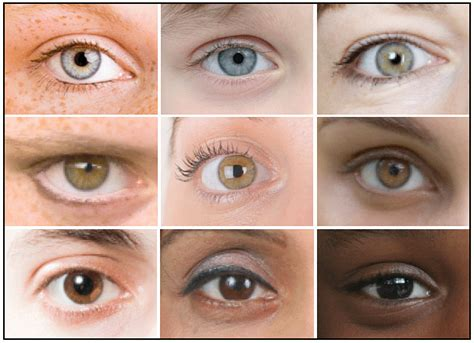 eye colors list eye color genetics siowfa12 science in our world