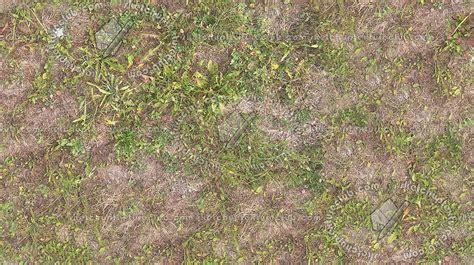 Dry grass texture seamless 17331