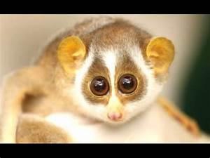 Cute Animals - ... Cute Animals