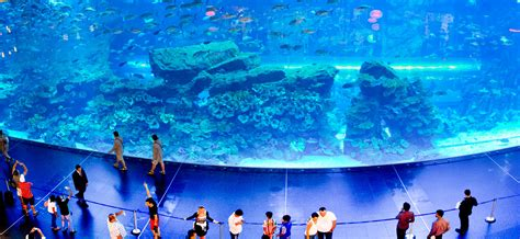 aquarium centre commercial dubai underwater zoo and aquarium in the world s largest aquarium