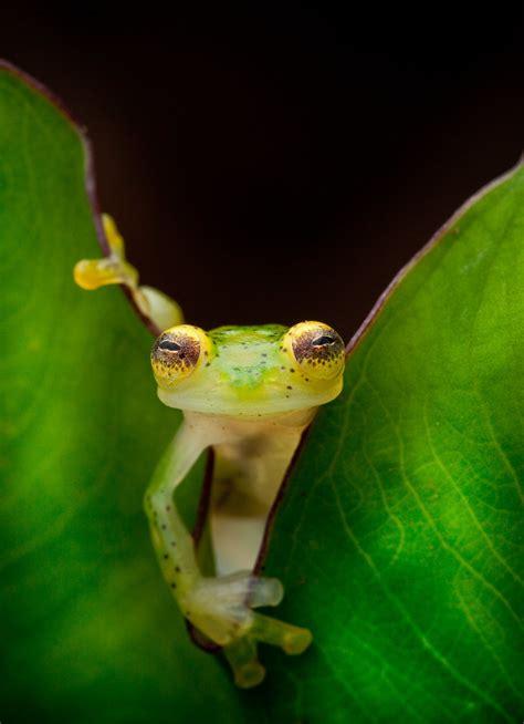 wild frogs newts  salamanders   eluded