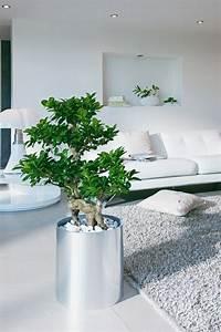 Décoration Feng Shui : 99 great ideas to display houseplants indoor plants ~ Dode.kayakingforconservation.com Idées de Décoration