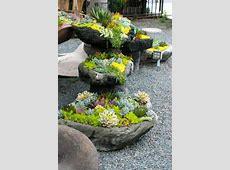 Succulent rock garden photos