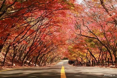 naejangsan maple tunnel  calm chronicle  lifestyle