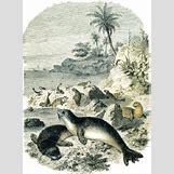 Mediterranean Monk Seal Food Web | 256 x 348 png 68kB