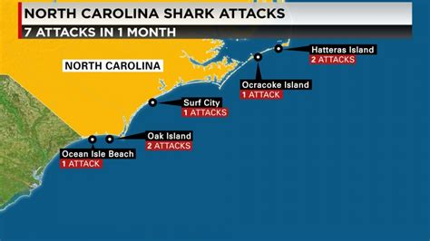 whats  increase  shark attacks   carolinas