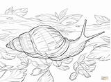 Coloring Pages African Printable Snail Land Garden Giant Chiara Bautista sketch template