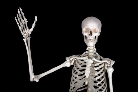 Funny Bone Does Everyone Have A Funny Bone Wonderopolis