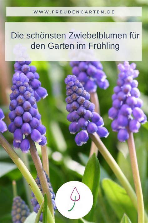 Die Schönsten Blumen Für Den Garten by Zwiebelblumen Im Fr 252 Hjahr Pflegen Und Gut Kombinieren