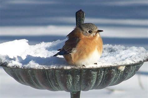 bird bath tips for winter birds birds and blooms