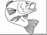 Coloring Rainbow Pages Trout Fishing Ice Fish Barracuda Drawing Printable Remarkable Getcolorings Fins Getdrawings Scales Realistic sketch template