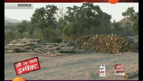 tree cutting news  marathi latest tree cutting news