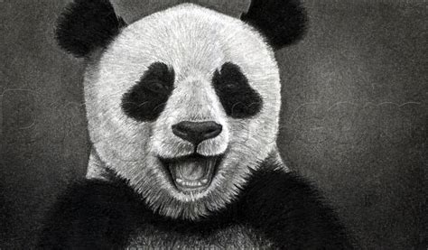 draw  happy panda step  step forest animals