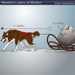 State newton's fist law of motion