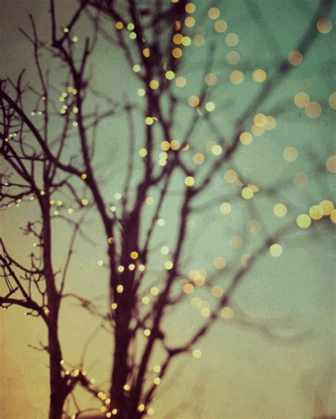 photography winter tree beautiful lights irene