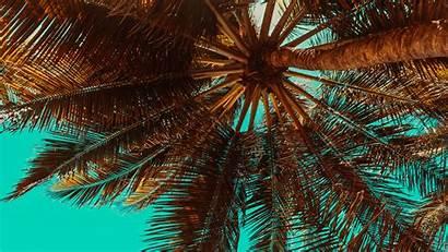 Palm Tropical Tree 4k Wallpapers 2160 Uhd
