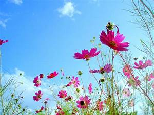 Beautiful Scenery Wallpaper Flower Wallpapers ...