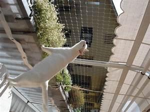 Reti di recinzione Rete per GATTI modello TRASPARENTE G 1