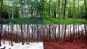 Four Season Forest Fugue