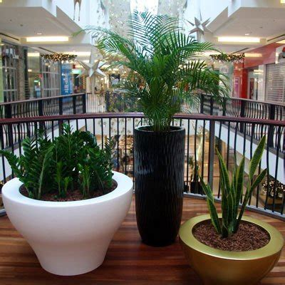 jual tanaman hias indoor lapak agus winaryo salmaflora