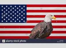 Standard Eagle Stock Photos & Standard Eagle Stock Images