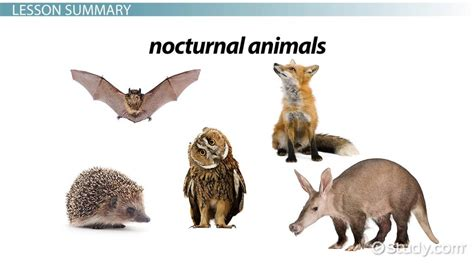 facts  nocturnal animals lesson  kids video