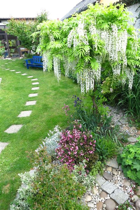 wisteria roots near house 78 images about wisteria laburnum on pinterest gardens wisteria and wisteria arbor