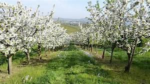 Rosa Blühende Bäume April : kostenloses foto fr hling b ume obstb ume bl te kostenloses bild auf pixabay 345623 ~ Michelbontemps.com Haus und Dekorationen