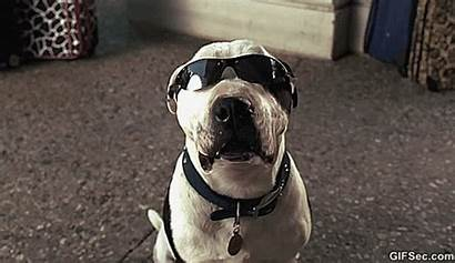 Dog Smiling Funny Gifs Dogs Sunglasses Want