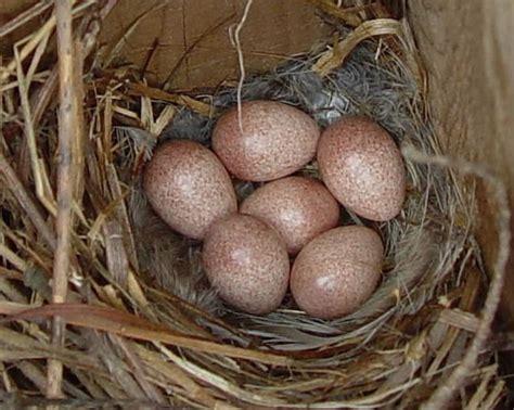 house wren nest www pixshark com images galleries with