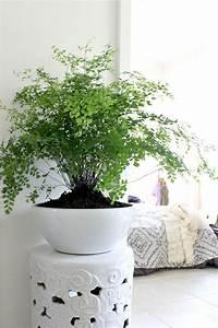 Support Plante Intérieur : 10 id es pour mettre des plantes dans son int rieur ~ Teatrodelosmanantiales.com Idées de Décoration