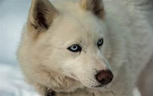 Symptoms Of Dog Enlarged Esophagus