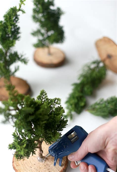 mini christmas tree live diy miniature live trees gardenista