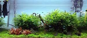 Kelvin Licht Tabelle : aquarium licht die grundlage des pflanzenwachstums im aquariumaquarien ~ Orissabook.com Haus und Dekorationen