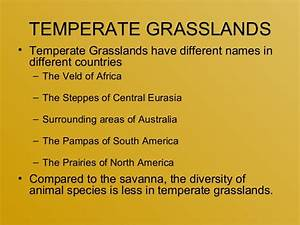 Grasslands Flora U0026 Fauna