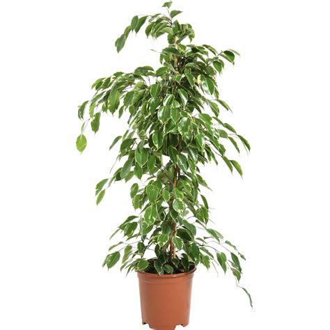 plante bureau jardins bleus plantes vertes