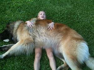 The Leonberger Is The Most Gloriously Majestic Dog You'll ...