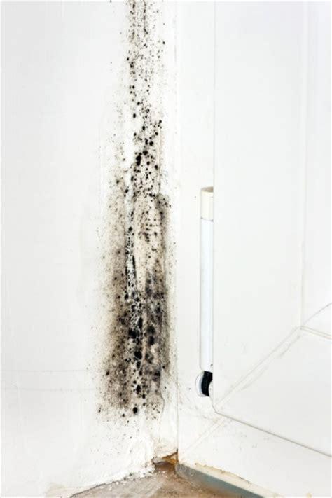 inhale black mold dust