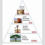 Grassland Energy Pyramid | 379 x 431 png 78kB